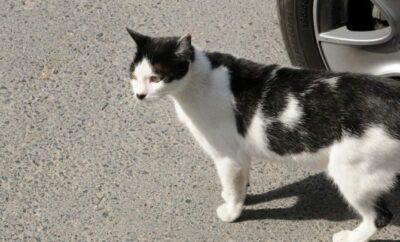 Istanbul Cats Make Everyone Happier