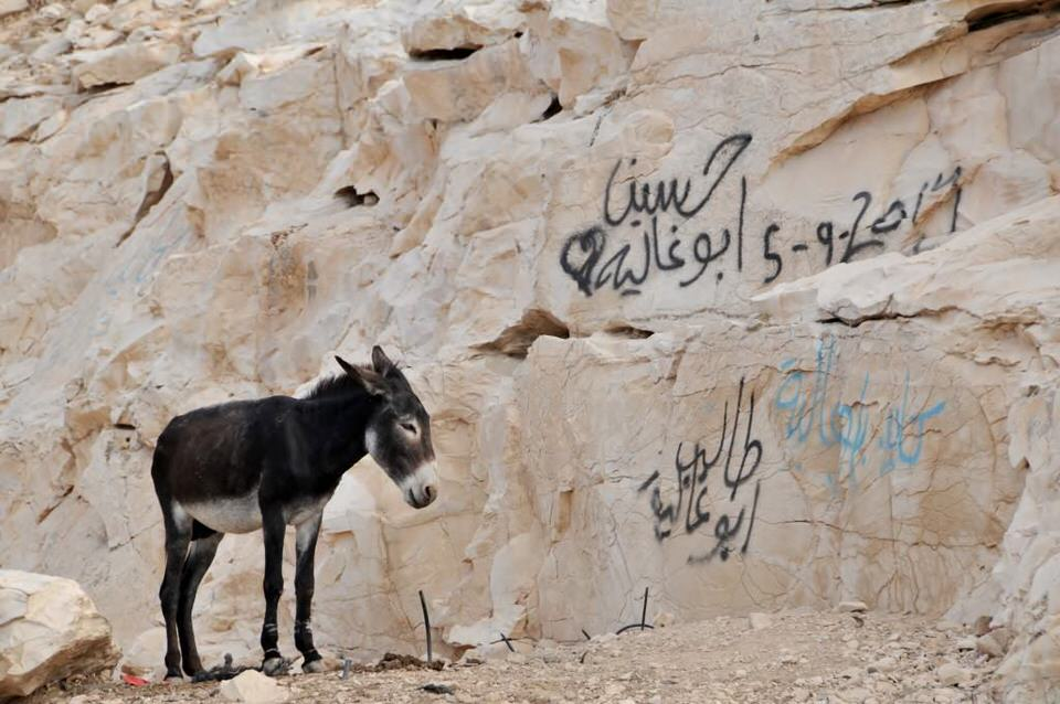 A donkey waiting patiently for its owner, Ramallah Palestine