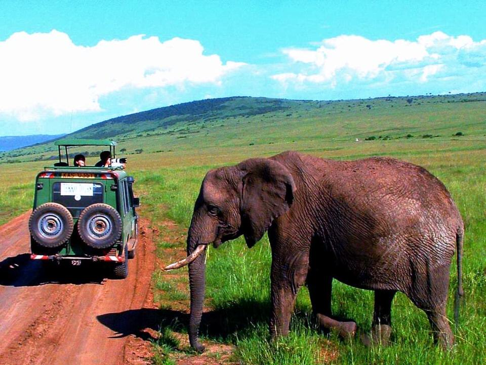 Elephant - Top 4 Tour Groups for Solo Women Travelers