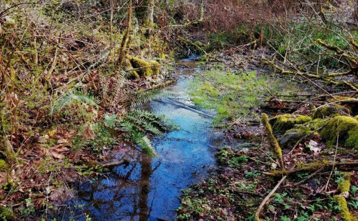 bellevue-washington-hikes, local hikes
