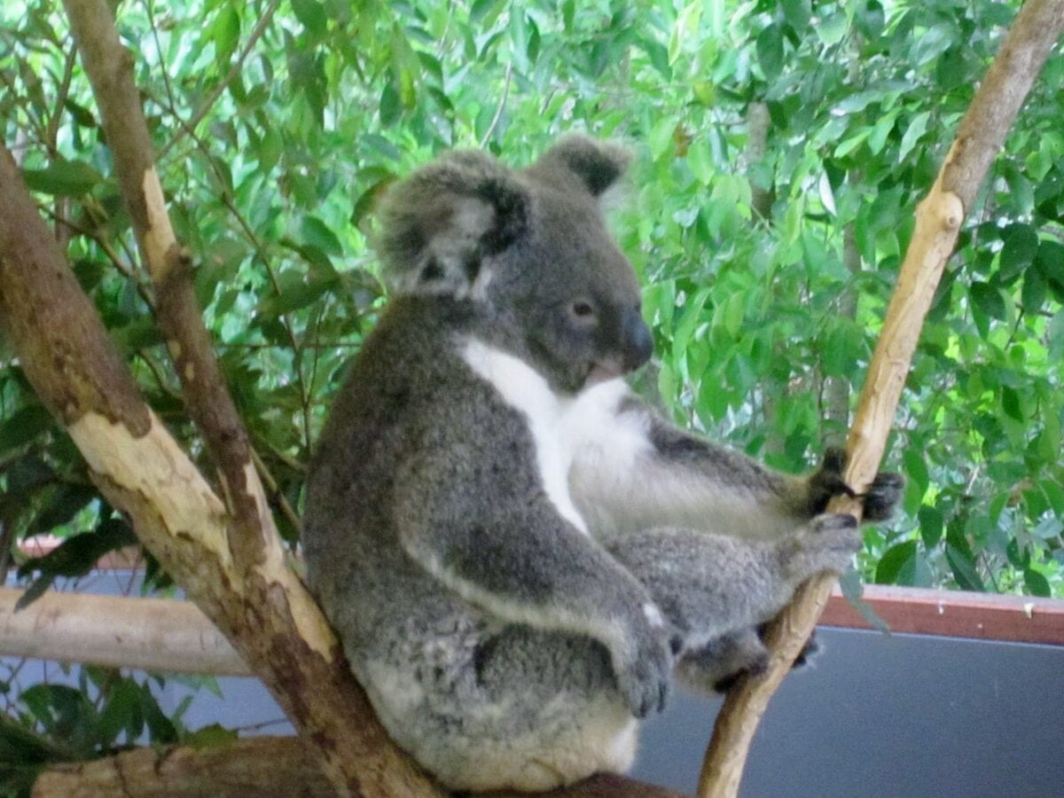 dangerous-australian-animals-creatures